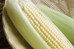 Espiga de milho Imagem de Stock Royalty Free