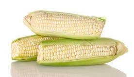 Espiga de milho branca fresca fotos de stock royalty free