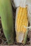 Espiga de milho doce cozinhada Fotos de Stock