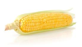 Espiga de milho fresca Foto de Stock