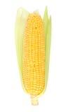 Espiga de milho fresca Fotos de Stock