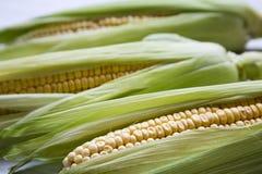 Espiga de milho fresca com cascas verdes, vista lateral closeup imagem de stock