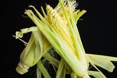 Espiga de milho fresca sobre um fundo preto Imagens de Stock