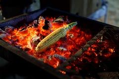 A espiga de milho madura é fritada em carvões encarnados imagens de stock royalty free