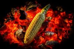 A espiga de milho madura é fritada em carvões encarnados, close-up fotos de stock royalty free
