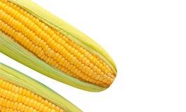 Espiga de milho madura Fotografia de Stock Royalty Free