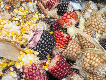 Espiga de milho rejeitada Fotografia de Stock