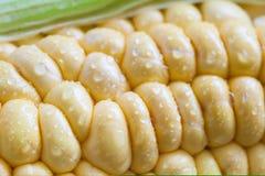 Espiga de milho (Zea maio) Imagem de Stock