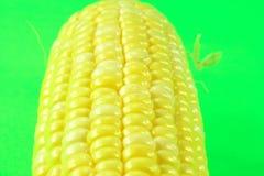 Espiga de trigo. Fotografía de archivo libre de regalías