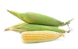 Espiga de trigo aislada en blanco Imagen de archivo libre de regalías