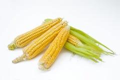 Espiga de trigo con las hojas foto de archivo libre de regalías