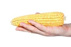 Espiga de trigo a mano aislada Foto de archivo libre de regalías