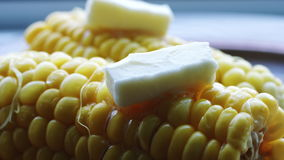 Espiga quente do milho fervido com manteiga vídeos de arquivo