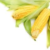 Espigas de milho Fotografia de Stock