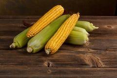 Espigas de milho Foto de Stock