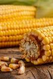 Espigas de milho Imagem de Stock