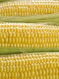 Espigas de milho Foto de Stock Royalty Free
