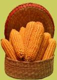 Espigas de milho empilhadas na cesta pequena do wicer Fotos de Stock Royalty Free