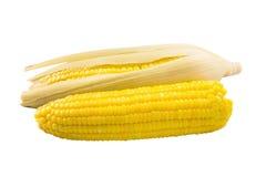Espigas de milho fervidas Imagem de Stock