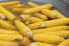 Espigas de milho fervidas Fotografia de Stock