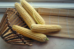 Espigas de milho na cesta Fotos de Stock Royalty Free