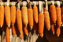 Espigas de milho secadas Fotos de Stock