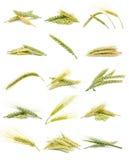 Espigas de trigo Fotografía de archivo