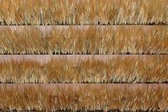 Espigas de trigo: Cuatro líneas Imagen de archivo