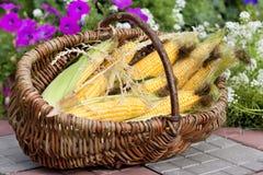Espigas de trigo maduras en una cesta de mimbre Fotos de archivo