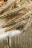 Espigas de trigo secadas imagen de archivo libre de regalías