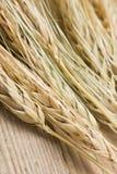 Espigas de trigo secas Imagen de archivo libre de regalías