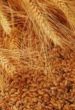 Espigas de trigo y grano Fotografía de archivo