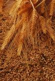 Espigas de trigo y grano Imagen de archivo libre de regalías