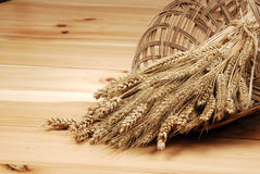 Espigas del oro de trigo en el dimin Fotos de archivo