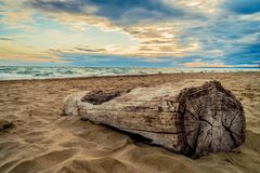 Espiguette beach in France. Wood log on a beach in France Stock Photography