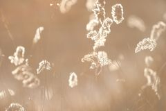 Espiguillas de la hierba seca del ` s del año pasado en el bosque de abril de la primavera en la puesta del sol Luz del sol retro Fotos de archivo libres de regalías