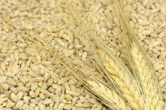 3 espiguillas de trigo mienten en el grano derramado, cereales, comida, ha Fotos de archivo libres de regalías