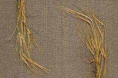 Espiguillas del trigo Imagen de archivo