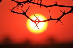 Espina de la puesta del sol - textura y fondo de la naturaleza - formas de la simetría Foto de archivo libre de regalías