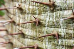 Espina del cactus Imagen de archivo