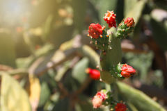 Espina del cactus Fotografía de archivo libre de regalías