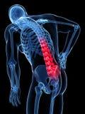 Espina dorsal destacada ilustración del vector