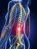 Espina dorsal destacada Imagen de archivo