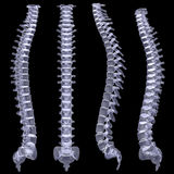 Espina dorsal humana libre illustration