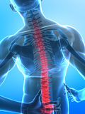 Espina dorsal humana de la radiografía stock de ilustración