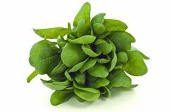 Espinaca fresca Foto de archivo