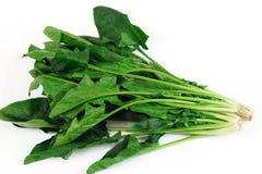 Espinaca verde fresca en el fondo blanco Fotografía de archivo libre de regalías