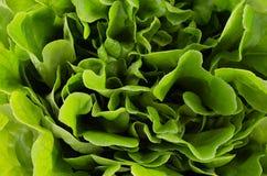 Espinaca verde rica del follaje enorme como fondo Contexto crudo de la comida del verano sano imágenes de archivo libres de regalías