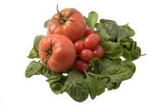 Espinaca y tomates Fotos de archivo