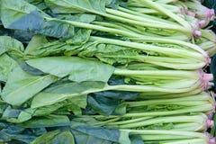 Espinafre Imagem de Stock